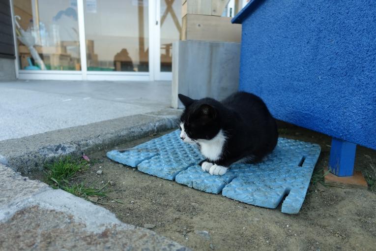 田代島の猫 猫島で有名な「田代島」と潮美荘がある「網地島」を巡る離島の旅