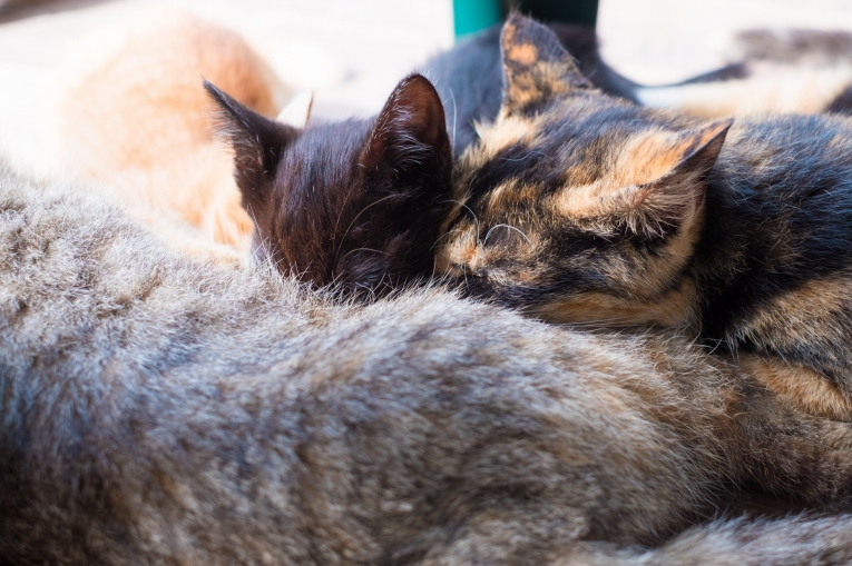 潮美荘の猫たち 猫島で有名な「田代島」と潮美荘がある「網地島」を巡る離島の旅